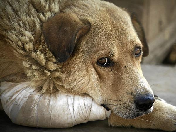 Арешт до 5 років за жорстокість – Рада прийняла закон про ставлення до тварин
