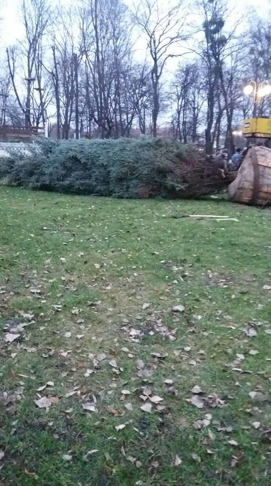 У парку ім. Шевченка висадили головну новорічну ялинку