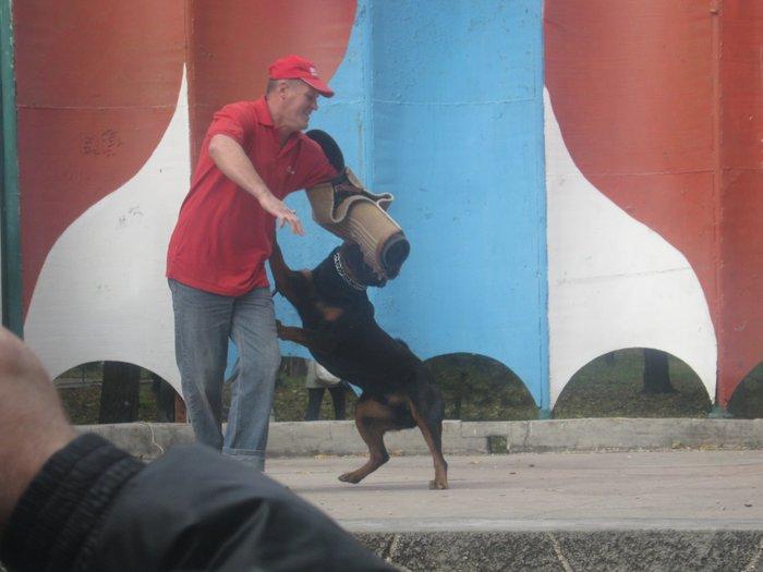 На выставке собак в Мариуполе мужчина с карманной собачкой сорвал овации зрителей (ФОТО), фото-17