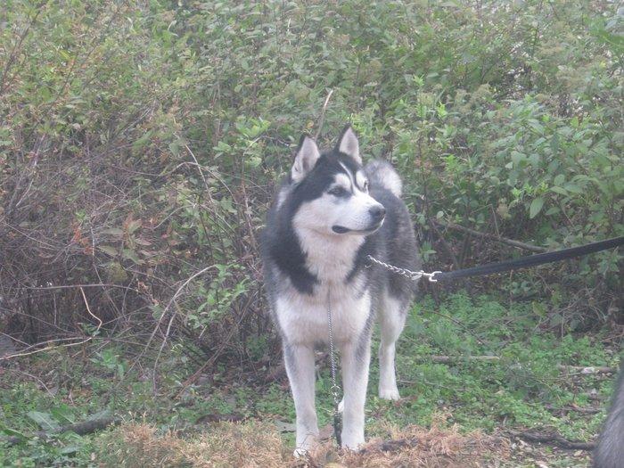 На выставке собак в Мариуполе мужчина с карманной собачкой сорвал овации зрителей (ФОТО), фото-10