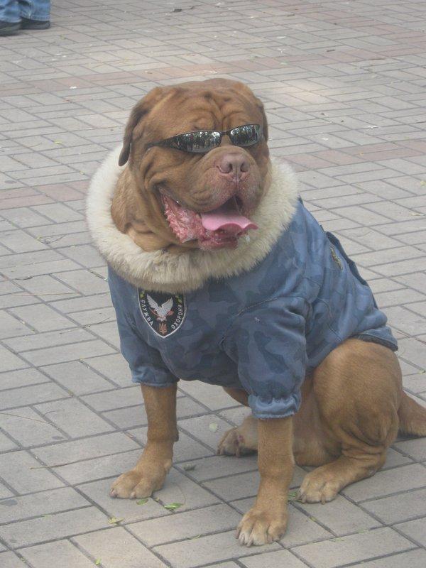 На выставке собак в Мариуполе мужчина с карманной собачкой сорвал овации зрителей (ФОТО), фото-13