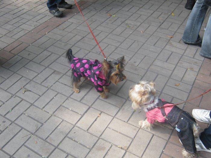 На выставке собак в Мариуполе мужчина с карманной собачкой сорвал овации зрителей (ФОТО), фото-2