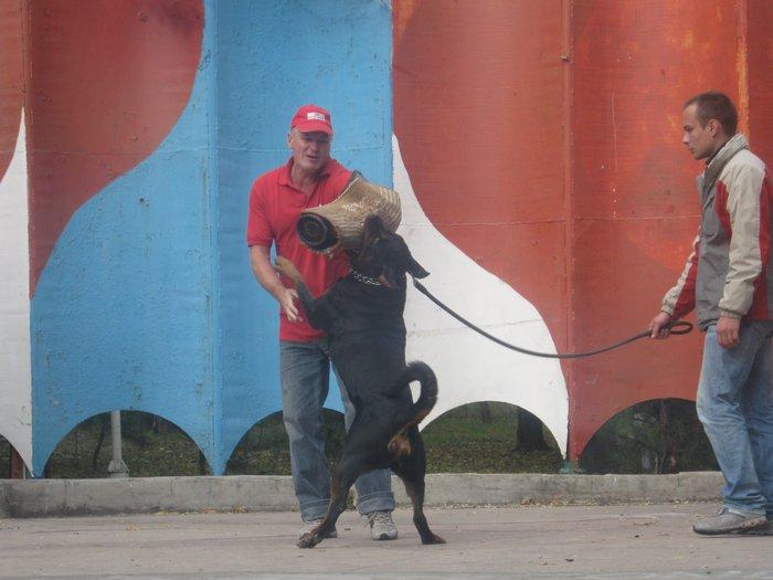 На выставке собак в Мариуполе мужчина с карманной собачкой сорвал овации зрителей (ФОТО), фото-16