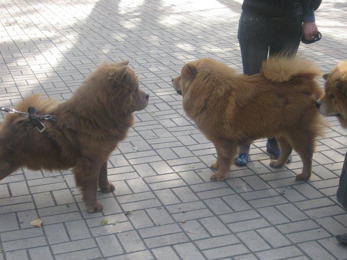 На выставке собак в Мариуполе мужчина с карманной собачкой сорвал овации зрителей (ФОТО), фото-4