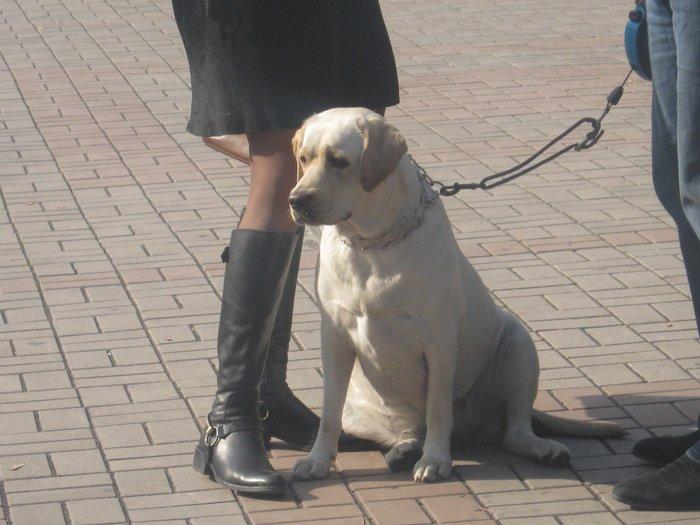 На выставке собак в Мариуполе мужчина с карманной собачкой сорвал овации зрителей (ФОТО), фото-3