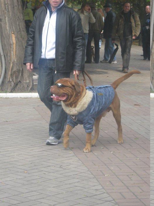 На выставке собак в Мариуполе мужчина с карманной собачкой сорвал овации зрителей (ФОТО), фото-12