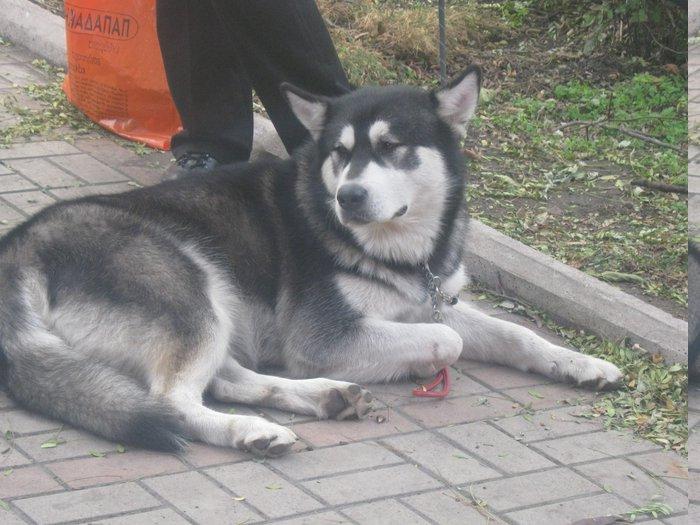 На выставке собак в Мариуполе мужчина с карманной собачкой сорвал овации зрителей (ФОТО), фото-9