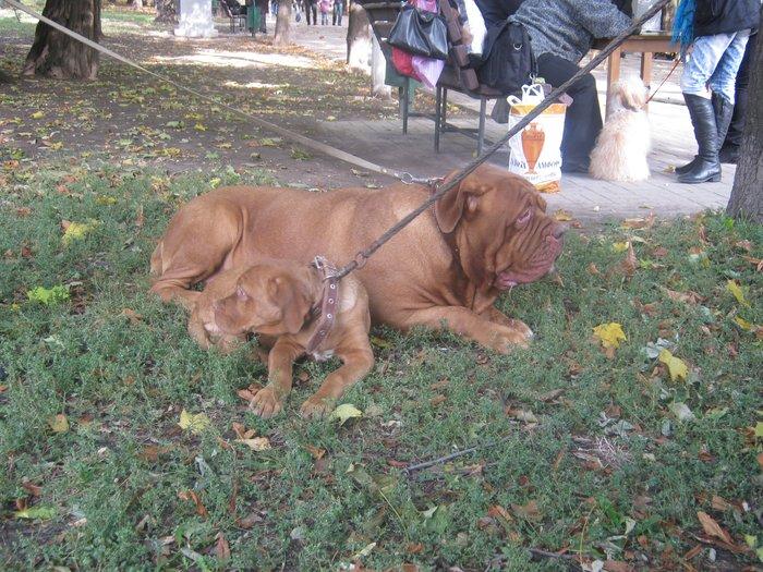 На выставке собак в Мариуполе мужчина с карманной собачкой сорвал овации зрителей (ФОТО), фото-19