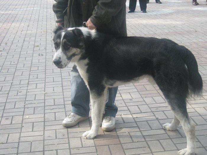 На выставке собак в Мариуполе мужчина с карманной собачкой сорвал овации зрителей (ФОТО), фото-8