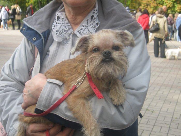 На выставке собак в Мариуполе мужчина с карманной собачкой сорвал овации зрителей (ФОТО), фото-11
