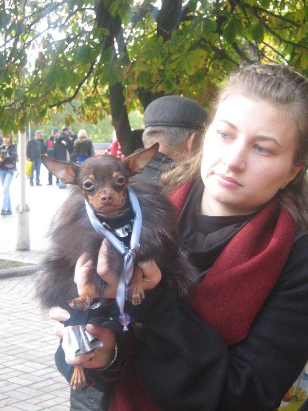 На выставке собак в Мариуполе мужчина с карманной собачкой сорвал овации зрителей (ФОТО), фото-5
