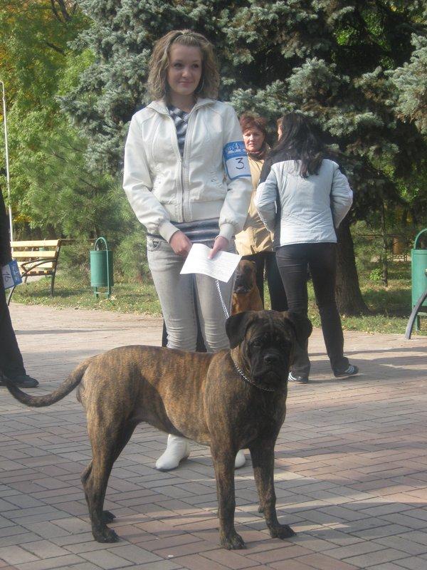 На выставке собак в Мариуполе мужчина с карманной собачкой сорвал овации зрителей (ФОТО), фото-6