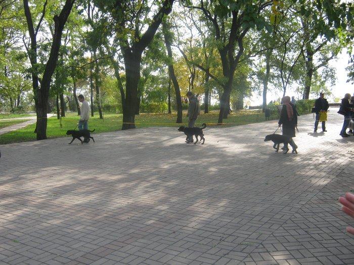 На выставке собак в Мариуполе мужчина с карманной собачкой сорвал овации зрителей (ФОТО), фото-21