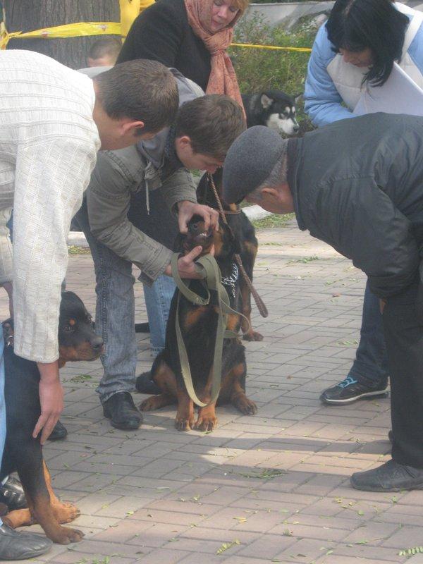 На выставке собак в Мариуполе мужчина с карманной собачкой сорвал овации зрителей (ФОТО), фото-20