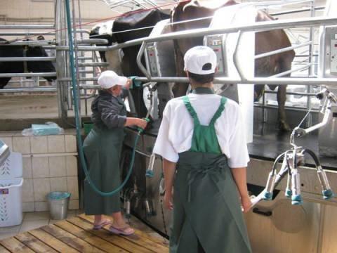 Мангушских коров, дающих молоко «под музыку Шопена», сертифицируют (ФОТО), фото-1