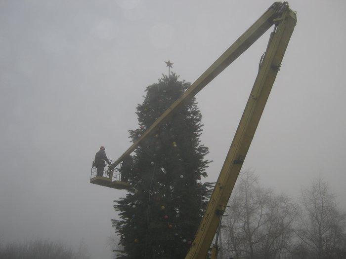 Елки в тумане. Мариупольские чиновники готовят город к Новому году (ФОТО), фото-2