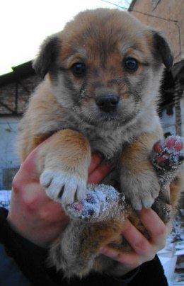 Один из обездоленных щенков