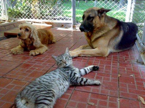 Мариупольские ветврачи отказались оперировать больных животных без кетамина , фото-1