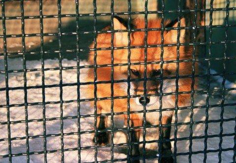 В сельском зверинце животные голодают, потеряв поддержку ильичевцев, фото-1