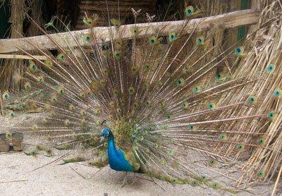 Мариупольцев начнут возить в сартанский зоопарк  уже со следующей недели, фото-1