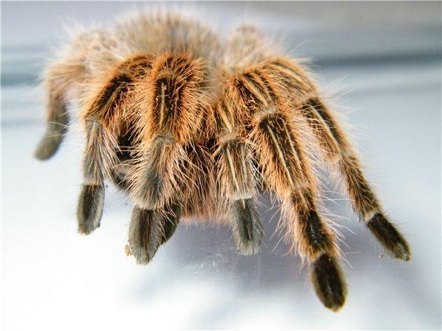 В Мариуполе поселились пауки-птицееды (ФОТО), фото-7