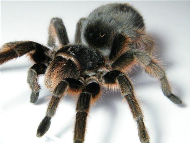 В Мариуполе поселились пауки-птицееды (ФОТО), фото-5