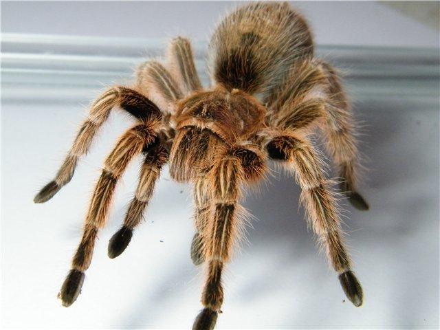 В Мариуполе поселились пауки-птицееды (ФОТО), фото-6