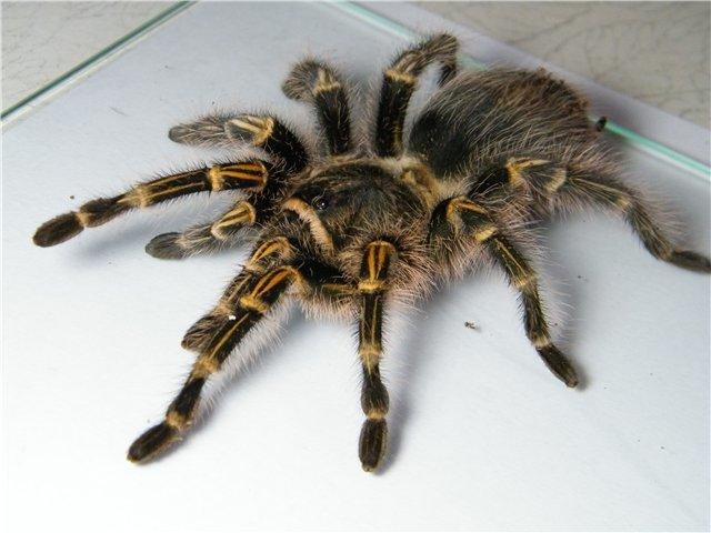 В Мариуполе поселились пауки-птицееды (ФОТО), фото-2