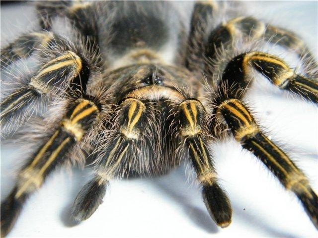 В Мариуполе поселились пауки-птицееды (ФОТО), фото-3