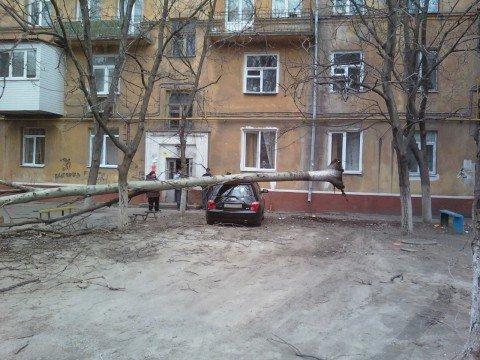 В Мариуполе тополь упал на автомобиль, припаркованный возле дома (Дополнено, ФОТО), фото-1