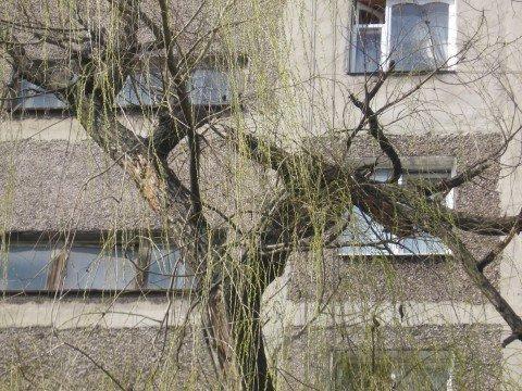 В Мариуполе сломанная ветка грозит упасть на головы горожан, (Дополнено ФОТО) , фото-1