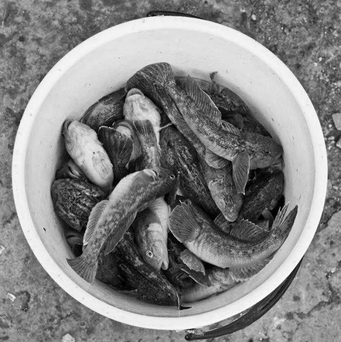 Мэр Мариуполя считает, что бычок поможет горожанам прокормиться (ФОТО), фото-3