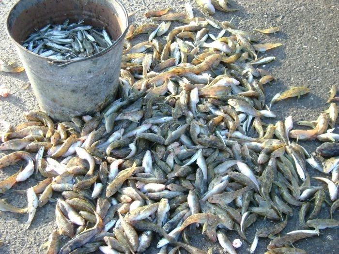 Корыто рыбы