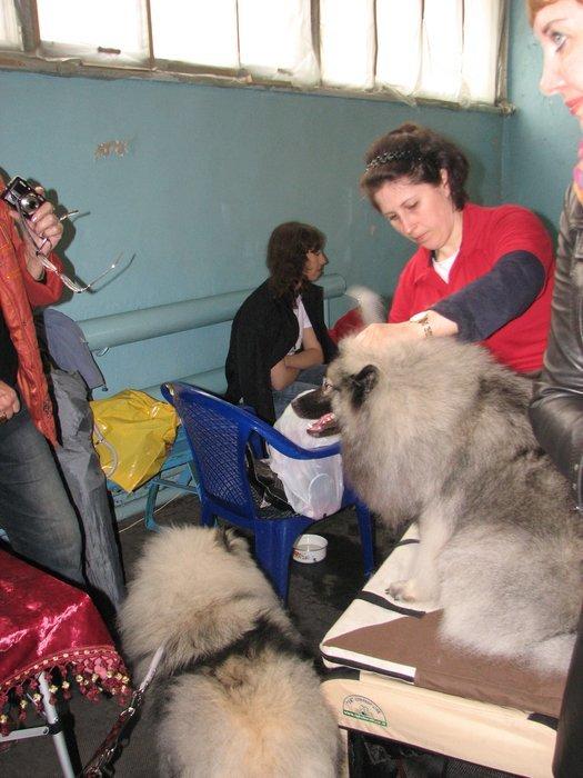 В Мариуполе прошли сразу две выставки собак (ФОТО) , фото-15