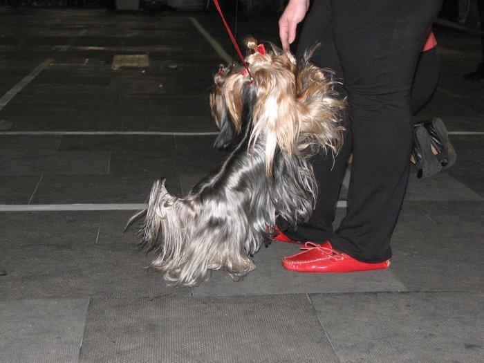 В Мариуполе прошли сразу две выставки собак (ФОТО) , фото-11