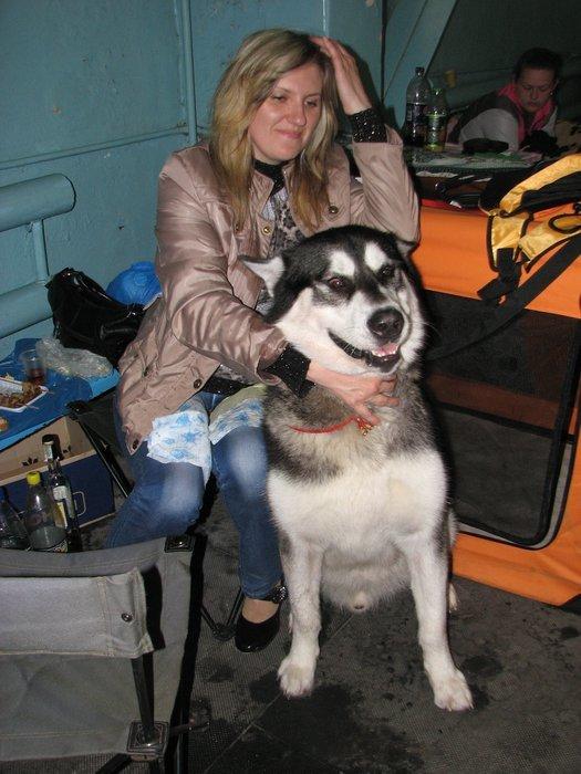 В Мариуполе прошли сразу две выставки собак (ФОТО) , фото-24