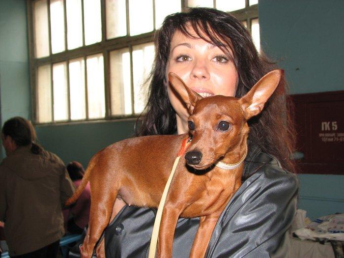 В Мариуполе прошли сразу две выставки собак (ФОТО) , фото-5