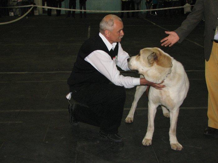 В Мариуполе прошли сразу две выставки собак (ФОТО) , фото-21