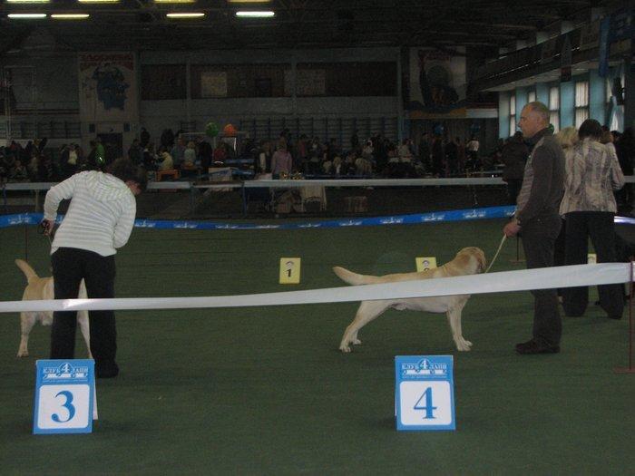 В Мариуполе прошли сразу две выставки собак (ФОТО) , фото-20