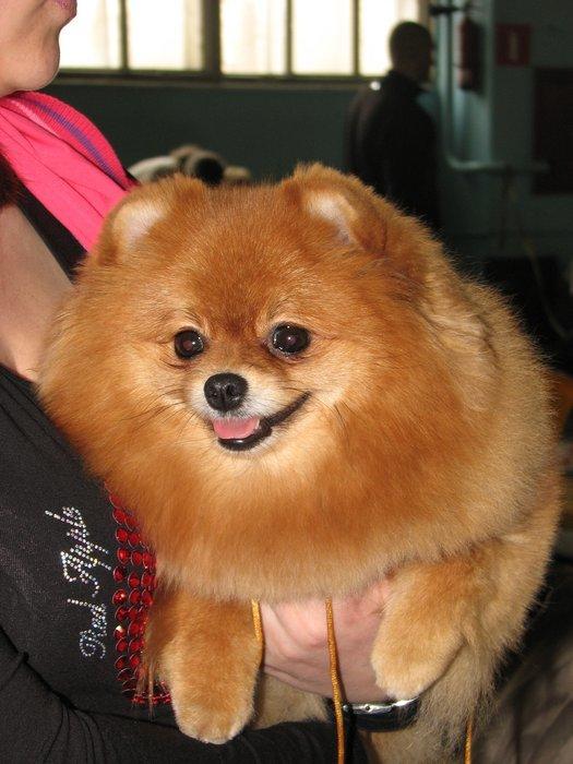 В Мариуполе прошли сразу две выставки собак (ФОТО) , фото-9