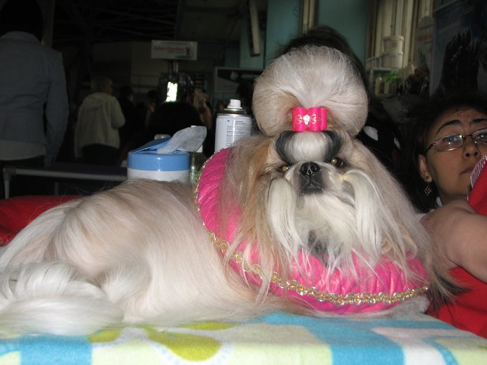 В Мариуполе прошли сразу две выставки собак (ФОТО) , фото-19