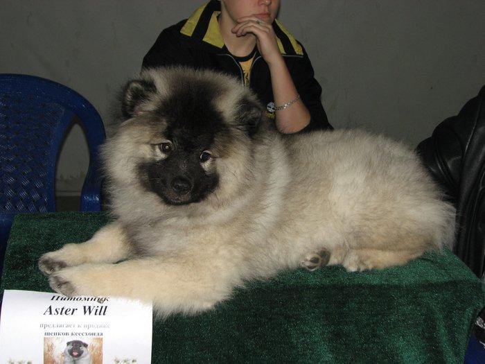 В Мариуполе прошли сразу две выставки собак (ФОТО) , фото-26