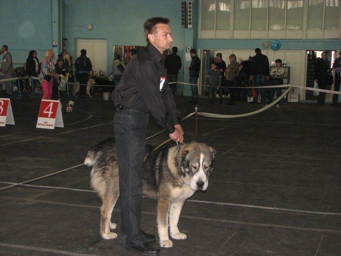 В Мариуполе прошли сразу две выставки собак (ФОТО) , фото-1