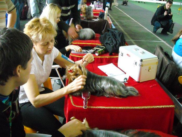 В Мариуполе прошли сразу две выставки собак (ФОТО) , фото-17