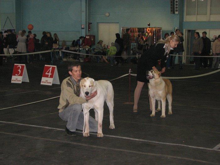 В Мариуполе прошли сразу две выставки собак (ФОТО) , фото-22
