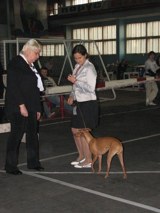 В Мариуполе прошли сразу две выставки собак (ФОТО) , фото-13