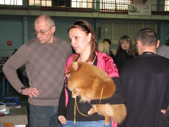 В Мариуполе прошли сразу две выставки собак (ФОТО) , фото-2