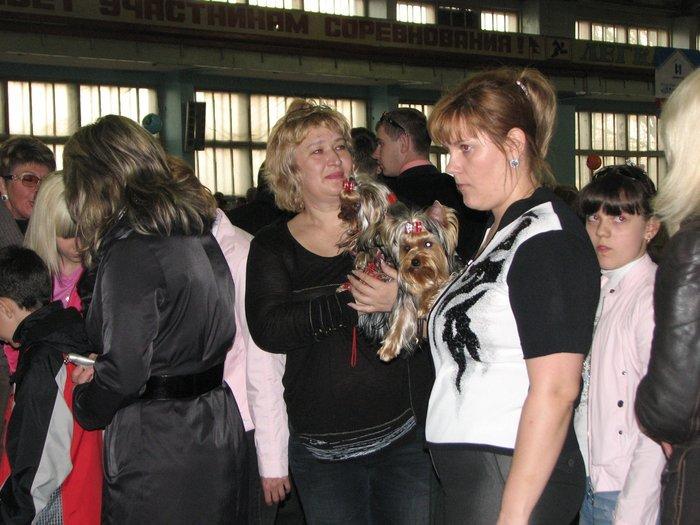 В Мариуполе прошли сразу две выставки собак (ФОТО) , фото-3