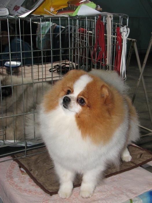 В Мариуполе прошли сразу две выставки собак (ФОТО) , фото-7