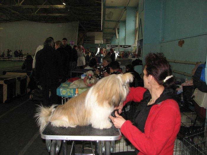 В Мариуполе прошли сразу две выставки собак (ФОТО) , фото-18
